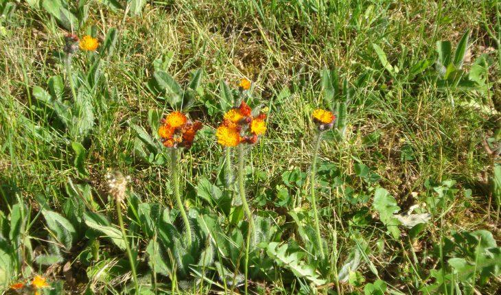 Identifying Common Garden Weeds In The Uk Guide