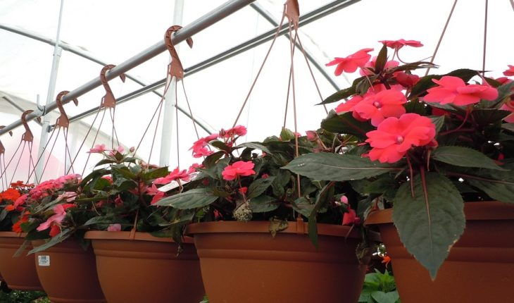 Best Plant For Hanging Baskets