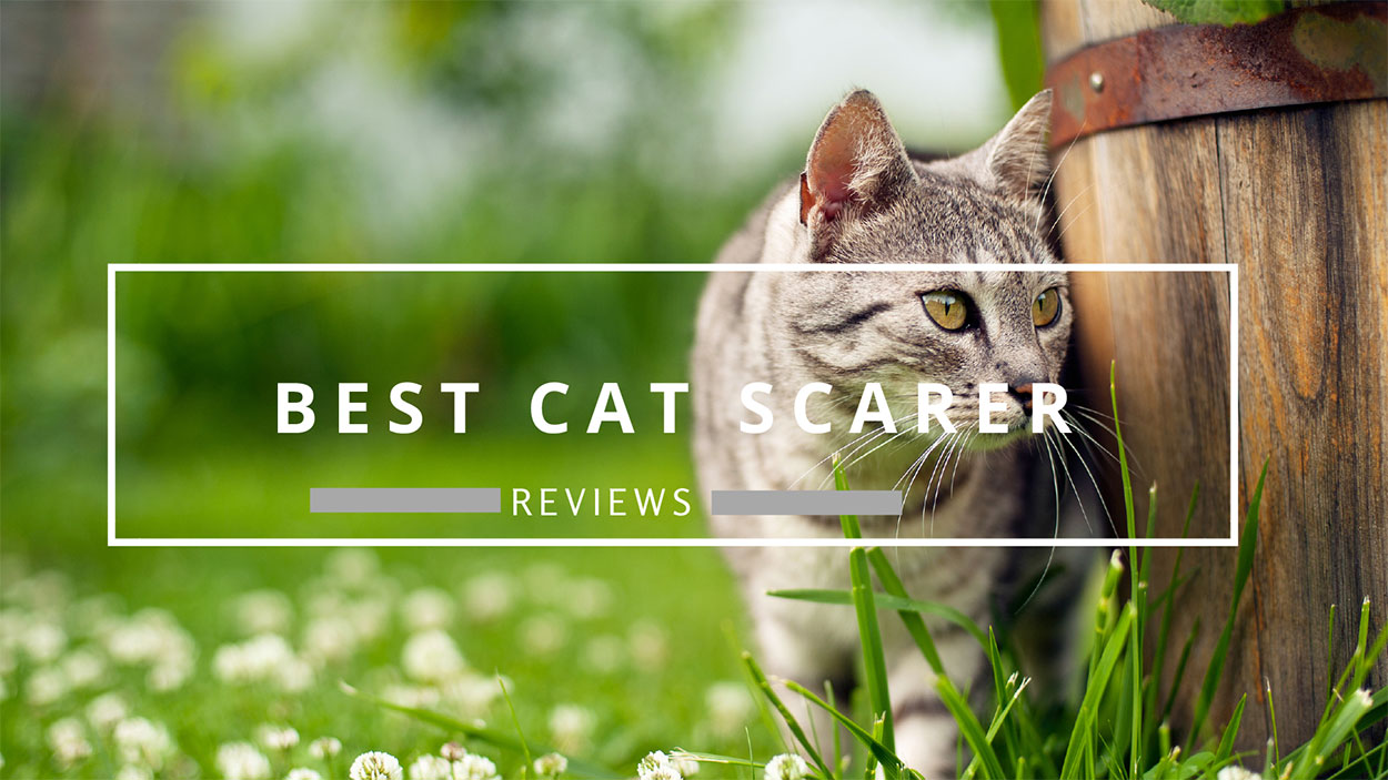 best cat scarer and repellent reviews