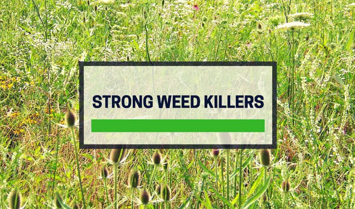 Best Strong Weed Killer Reviews UK 2019 | Lawns and Patios