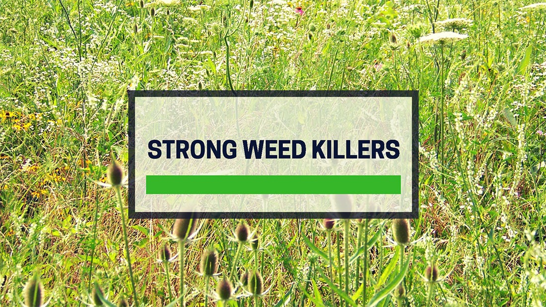 Best Strong Weed Killer UK