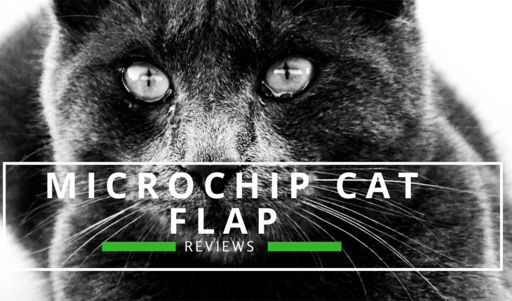 Best Microchip Cat Flap Reviews UK