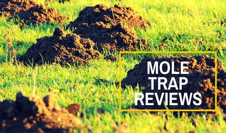 Best Mole Traps Reviews UK