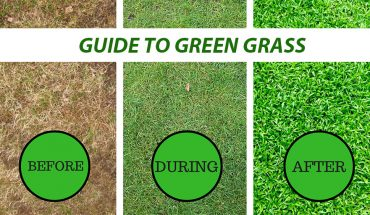 hOW TO KEEP YOUR GRASS GREEN