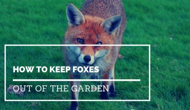 How to keep foxes out of the garden