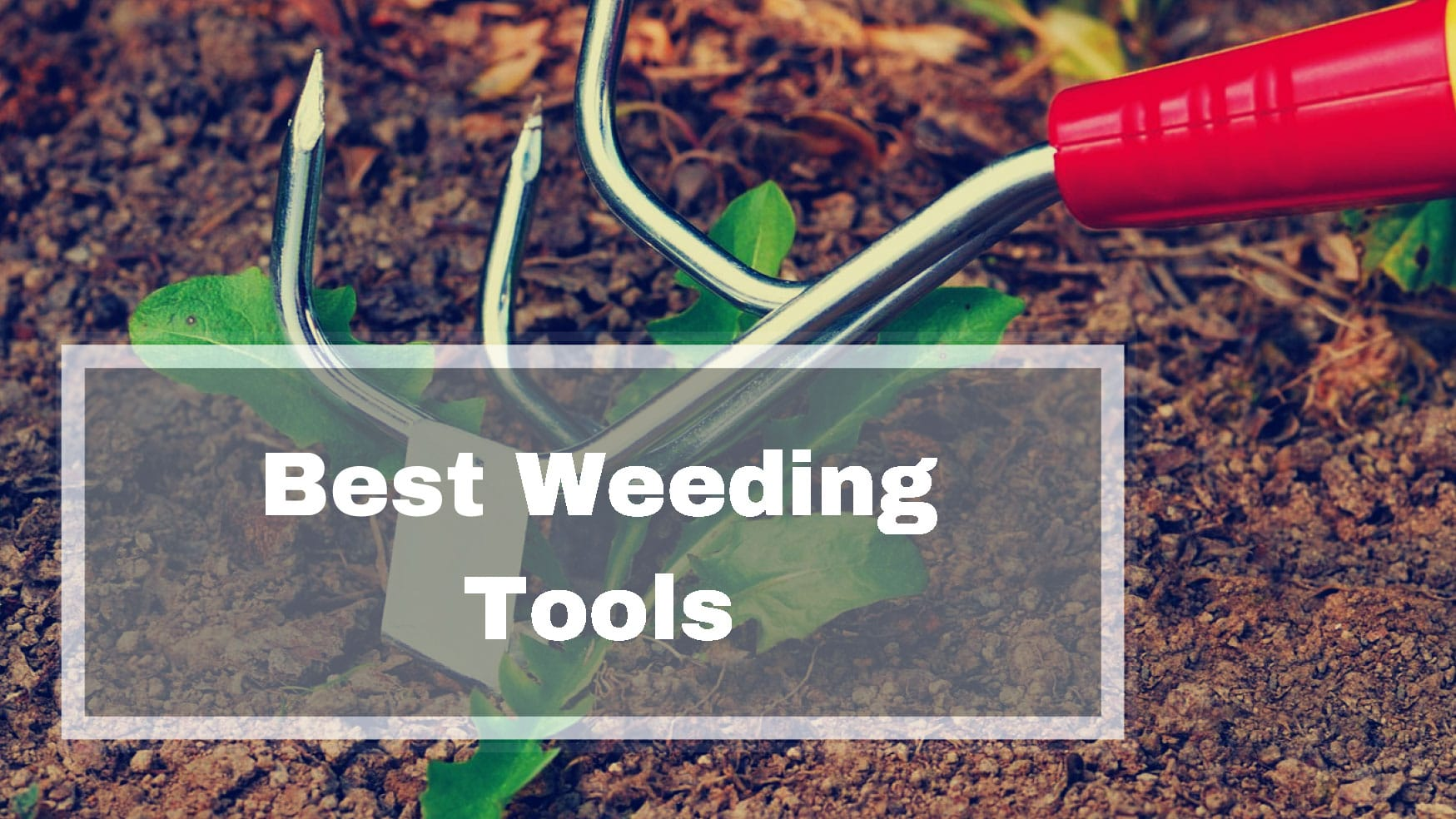 Best Weeding Tools Reviews UK