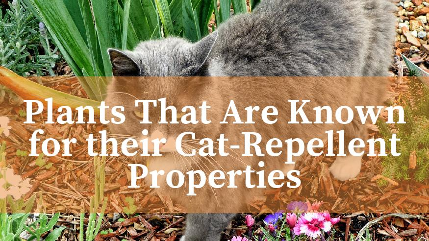 plants that repel cats from your garden