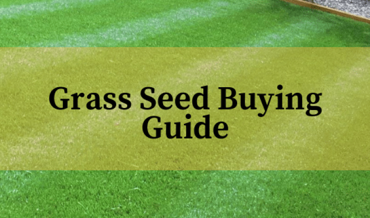 Best Lawn Grass Seed Reviews UK