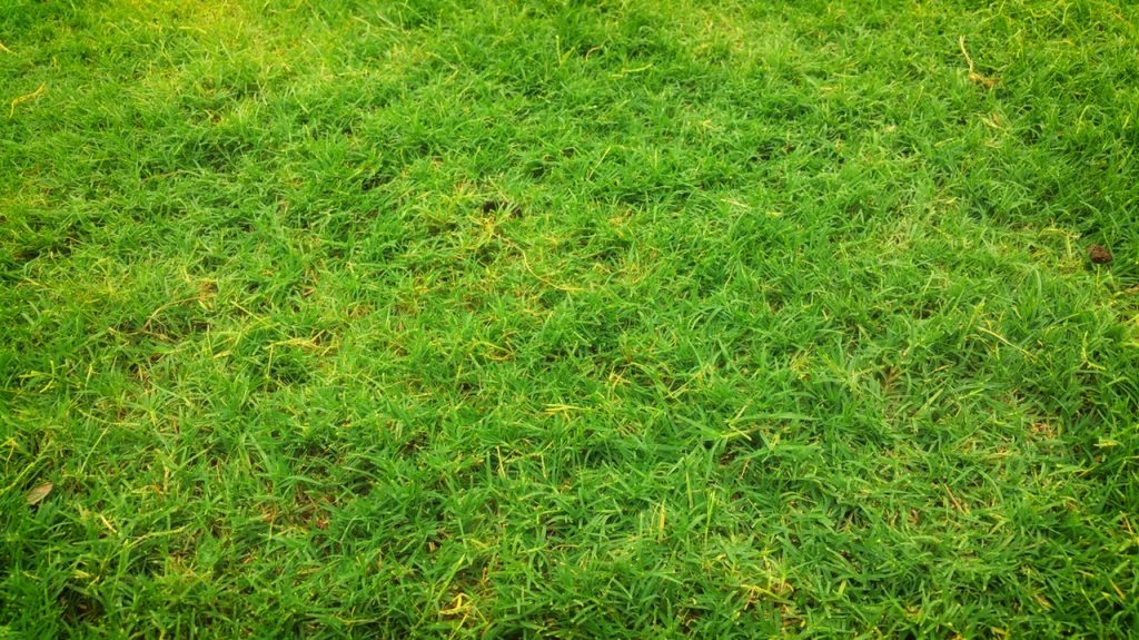 grass types for lawn seeds