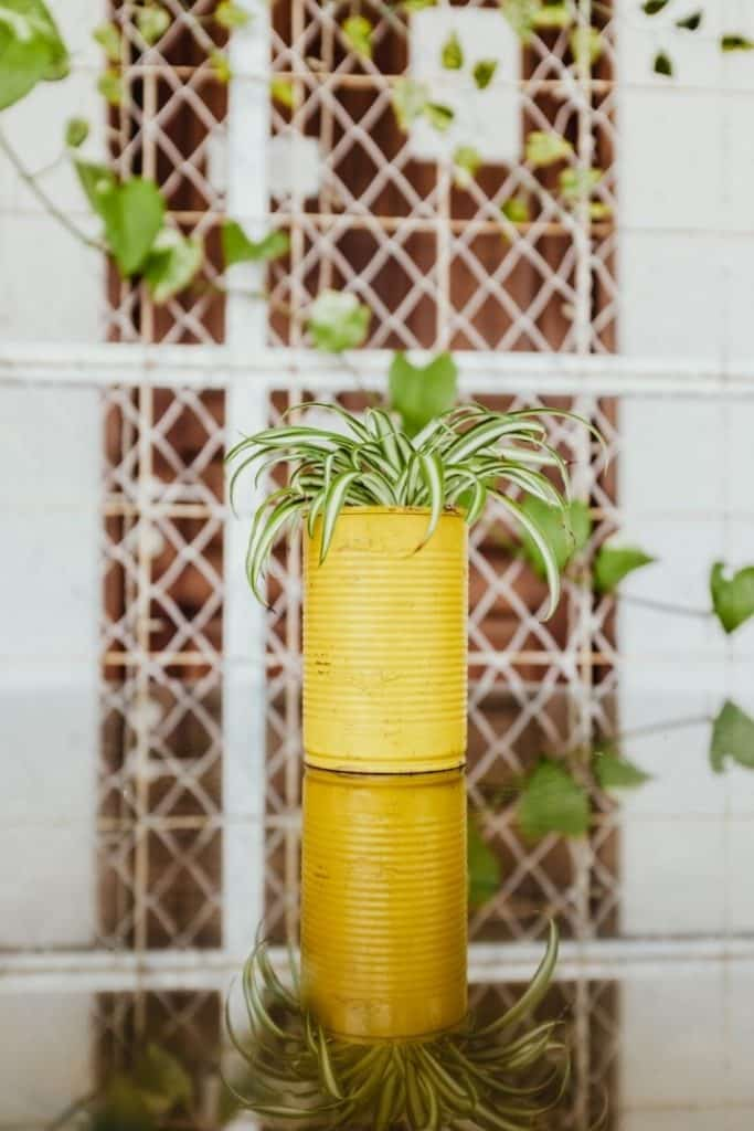 Recycle tin cans as planters