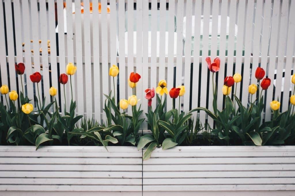 inexpensive planters
