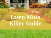 Best Lawn Moss Killer Reviews UK