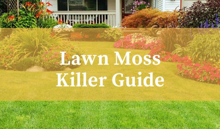 Best Lawn Moss Killer Reviews UK