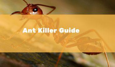 Best Ant Killer UK Reviews