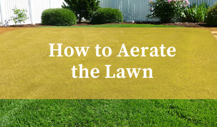 How to aerate the lawn UK
