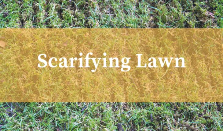 when to scarify lawn