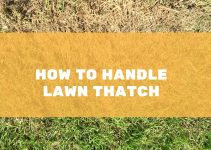 HOW TO DEAL WITH LAWN THATCH
