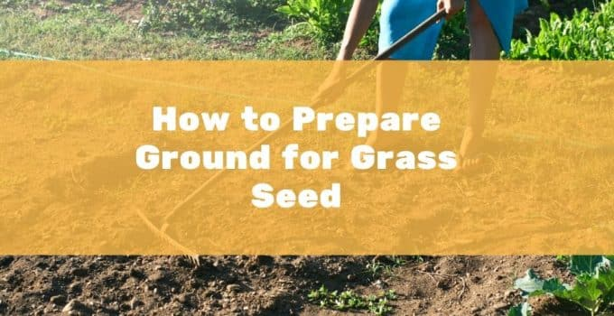 How to prepare the ground for grass seeds