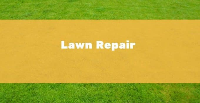How to repair a lawn in the UK